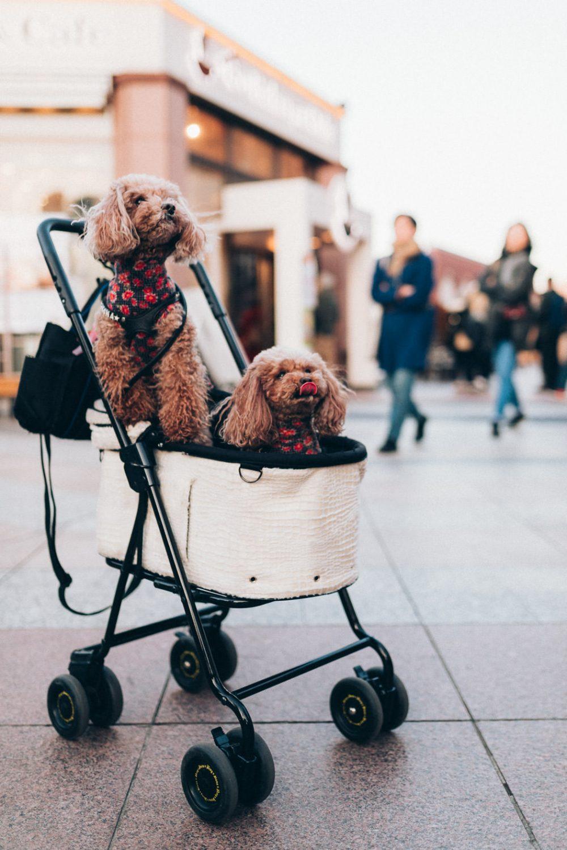 Hunde in Tokio