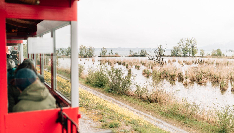 Rheinschauen Zug
