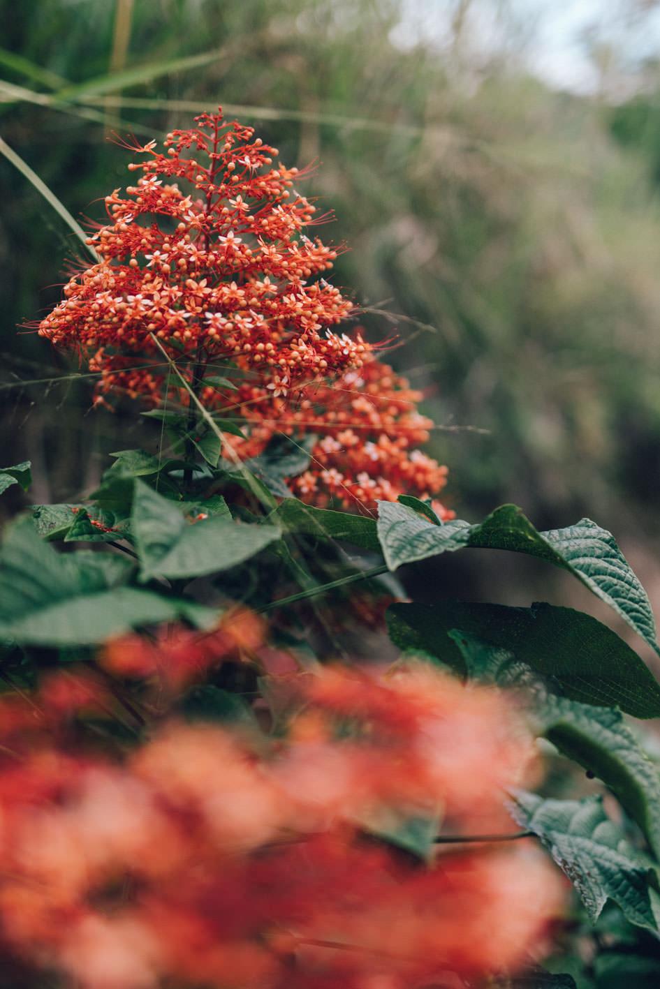 flower in Bukittinggi