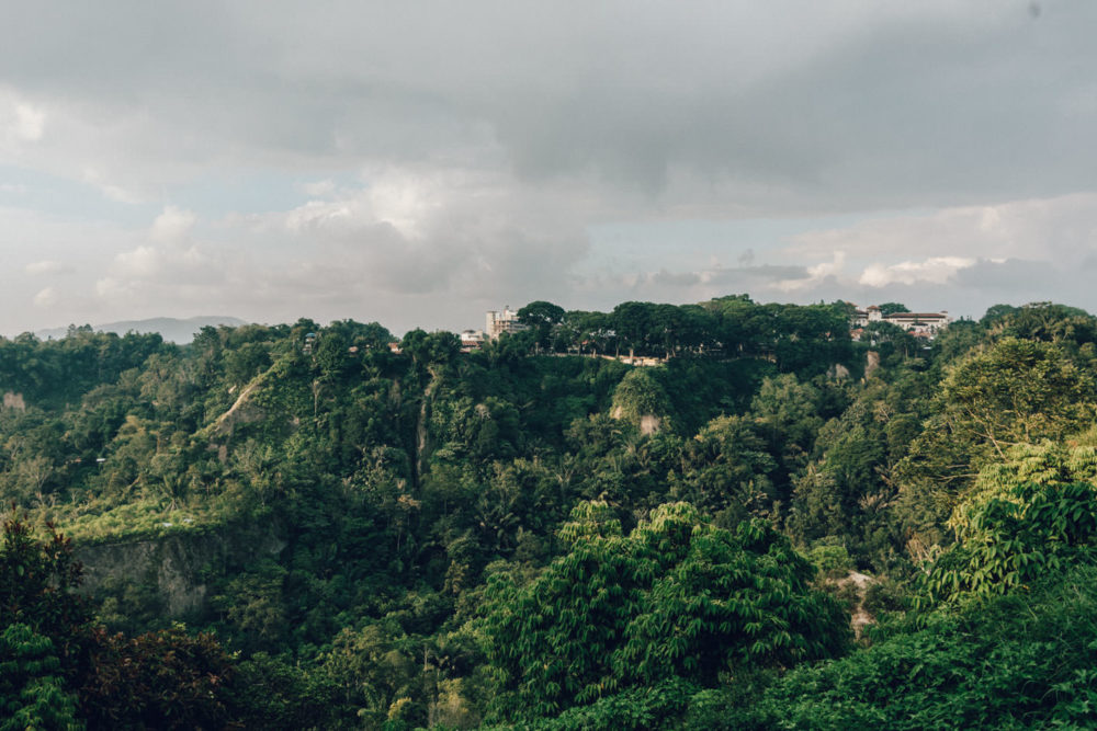 Bukittinggi jungle