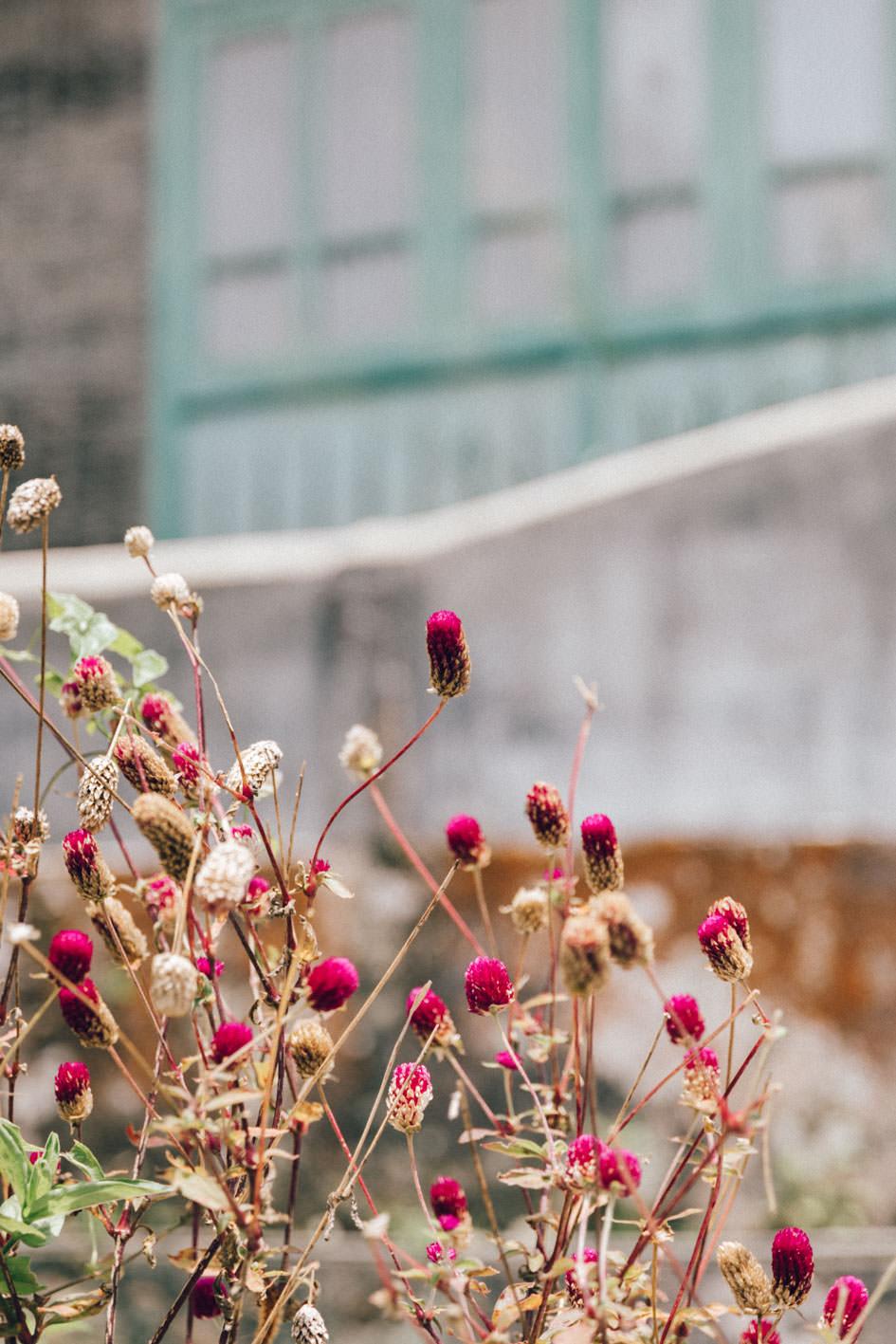 makro flowers