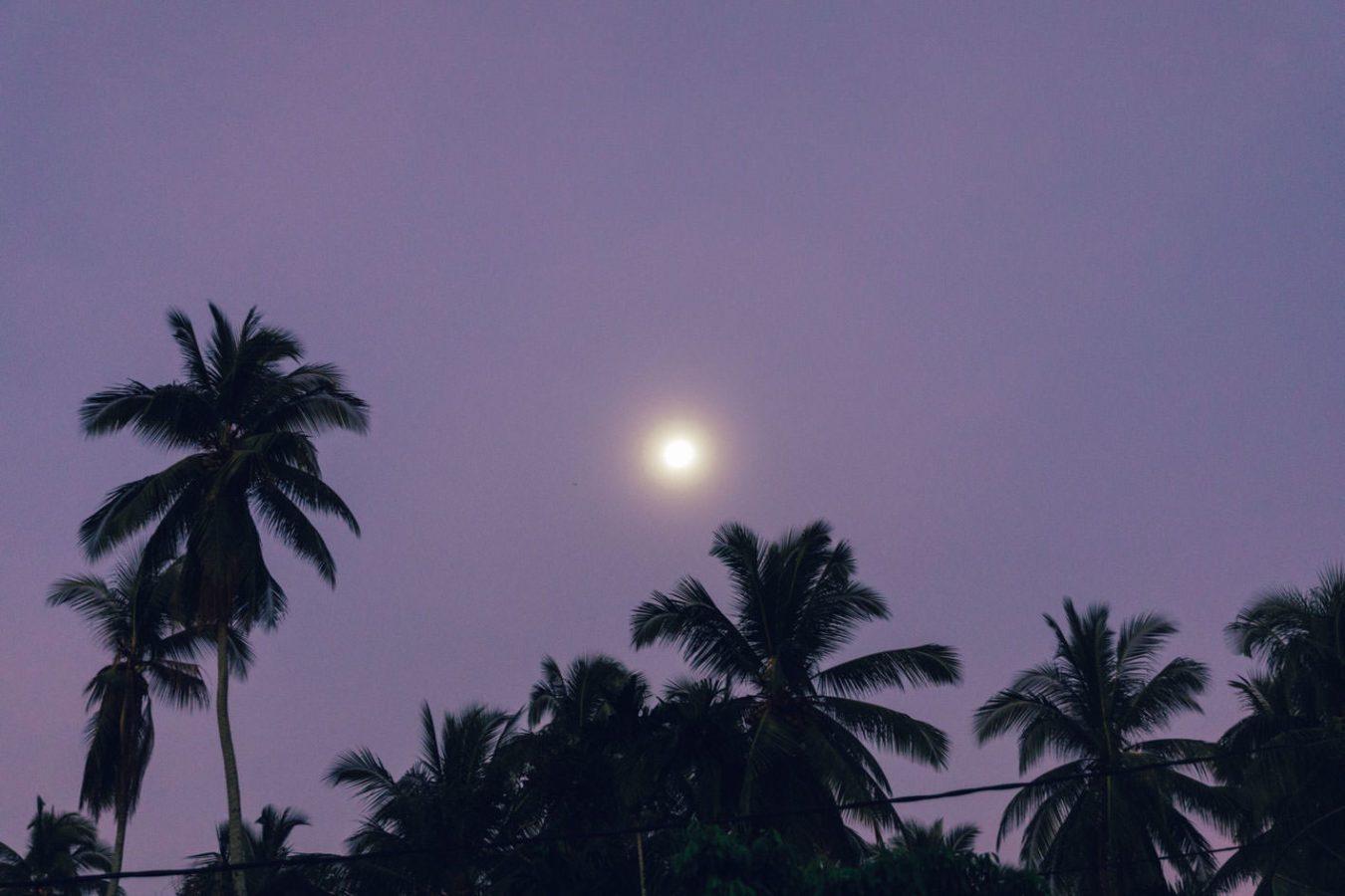 jungle moon